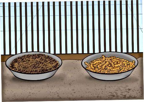 Paarungsfinken