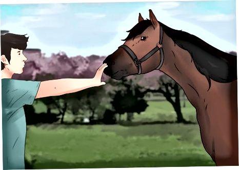 Manejo de caballos desde el suelo