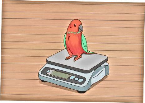 Monitorear la dieta de tu pájaro