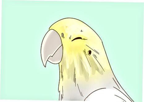 Monitoreando la apariencia de su pájaro