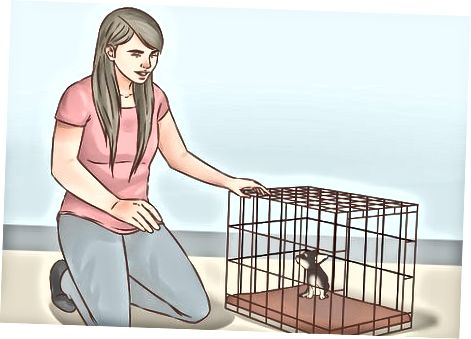 Ausüben a Training Äre Puppelchen