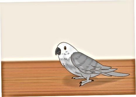 Monitorear el comportamiento de tu pájaro
