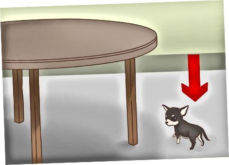Äre Chihuahua Puppy gesond a sécher halen