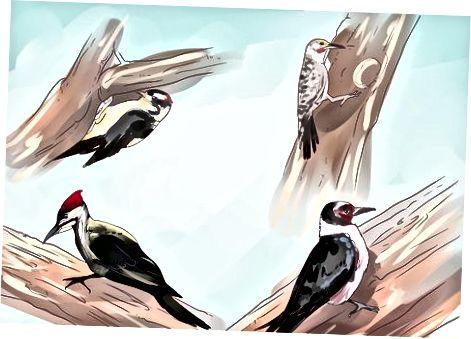 Hacer su patio más atractivo para los pájaros carpinteros