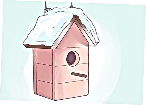 Hacer su patio más atractivo para otras aves