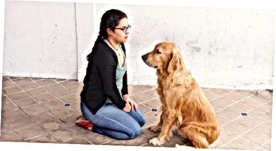 犬の行動を評価する