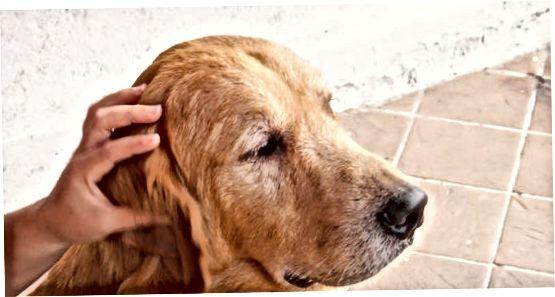 Hëlleft Ären Hond Gewinnt mat Hugen