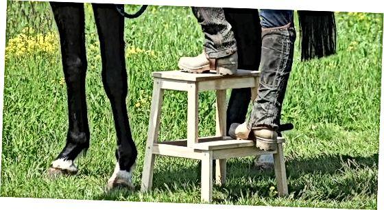Plassering av hesten