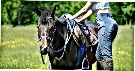 Placera hästen