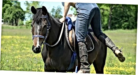 Klatre på hesten din