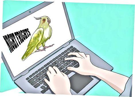 Cuidando a tu Cockatiel