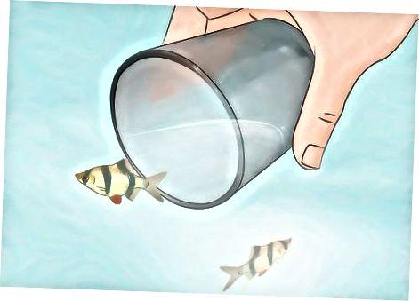 Riteņbraukšana ar zivīm