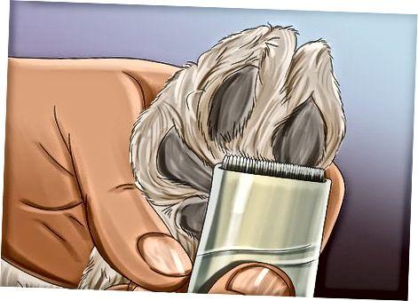 Oříznutí těla Goldendoodle
