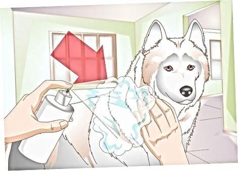 Διατηρώντας το κουτάβι σας καθαρό μεταξύ των ντους