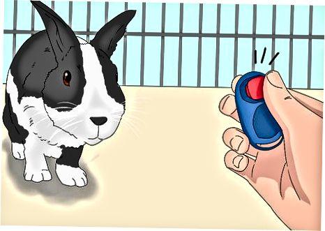 הכשרת הארנב שלך למעקב אחר הפקודות