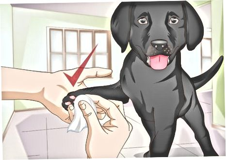 Garder votre chiot propre entre les douches