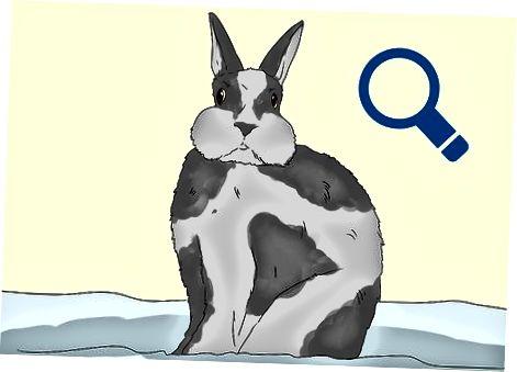 התייחסות לתוקפנות ארנב
