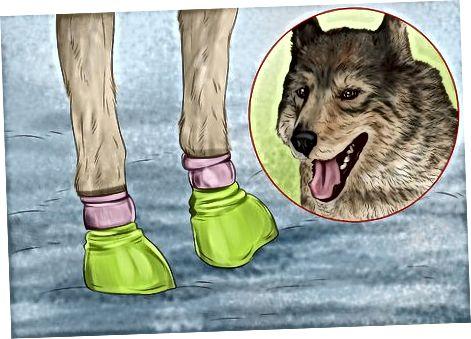 Cuidar los pies de tus perros