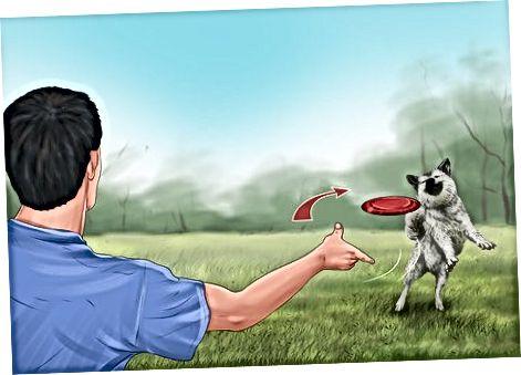 Dale a tus perros espacio para vivir y jugar