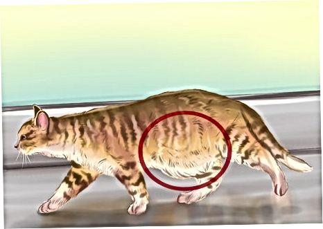 Buscando signos físicos de que un gato tiene gusanos