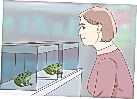 Comprando tu rana
