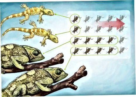 Administrando cuánto come su reptil