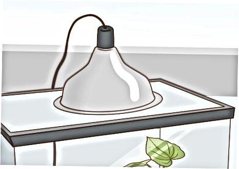 Configurando el hábitat de tu rana