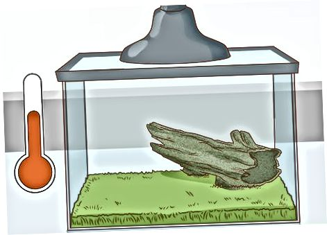 Menyiapkan Habitat Katak Anda