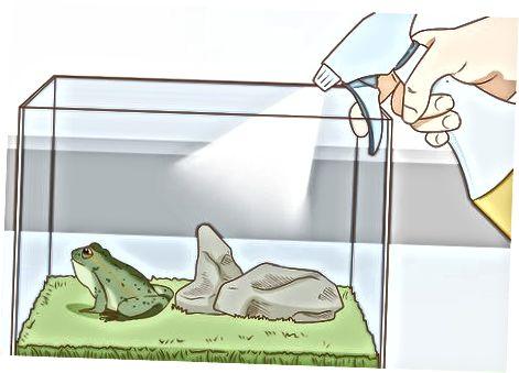 Cuidando a tu rana