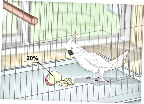 Alimentando seu papagaio