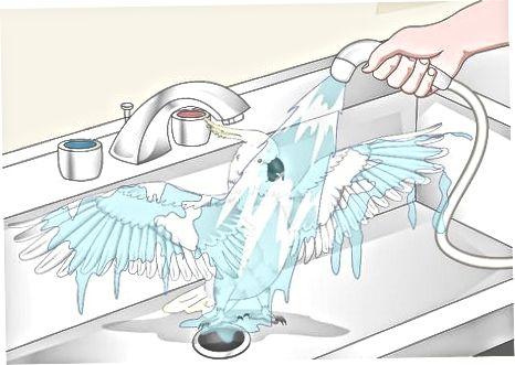 Preparando seu pássaro