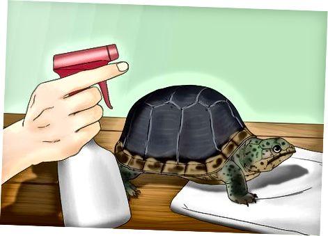Ayudando a Tortugas y Tortugas