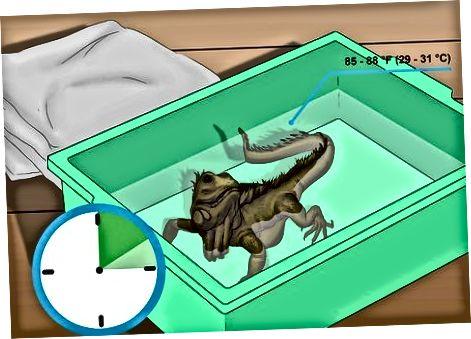 Cuidando lagartos