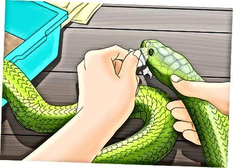 Ayudar a las serpientes