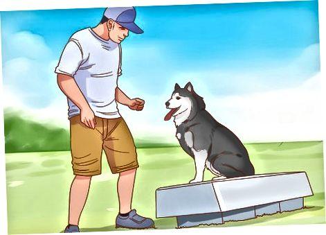 Entrenar a un perro para escuchar