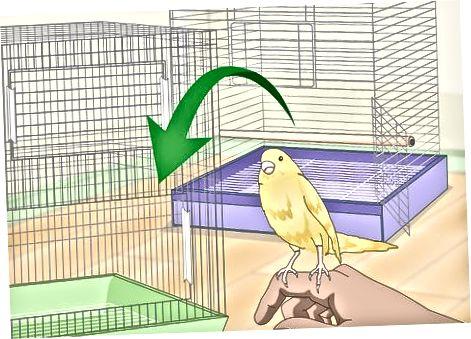 Fjernelse af lus og mider fra et fuglebur