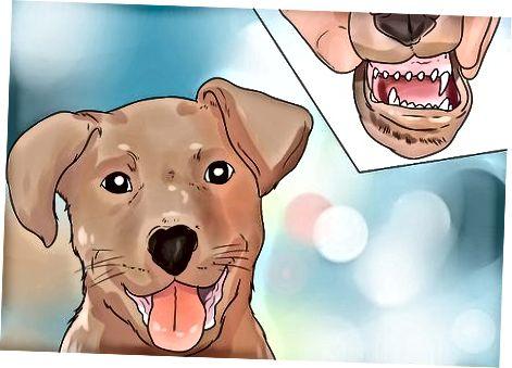 Entendiendo los dientes de tu perro