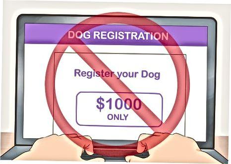 Escolhendo onde registrar seu cão