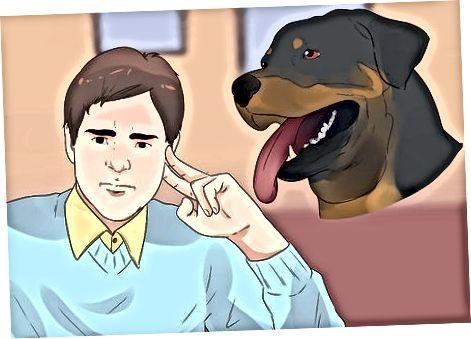 Trayendo a tu cachorro Rottweiler a casa