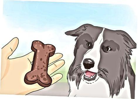 Walking a Dog: Basics