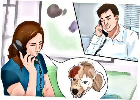 Socializar un perro adulto