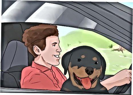 Socializando a su cachorro Rottweiler