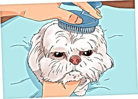Příprava a kartáčování vašeho psa