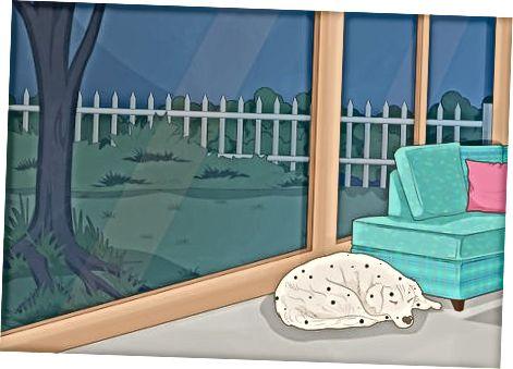 Melindungi Kookaburras di Kebun Anda