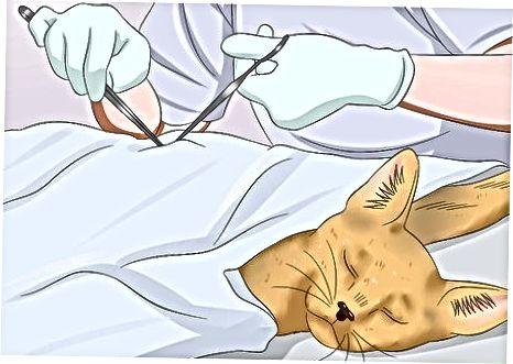 Rūpinkitės savo katės sveikata