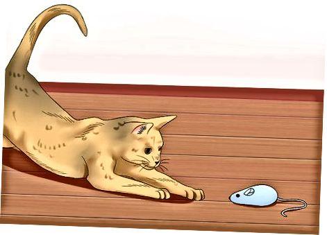 Treniruok savo katę