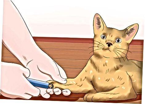 Prižiūrėk savo katę