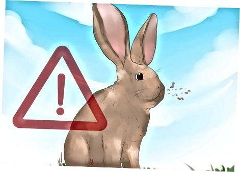 Comprender los sonidos que hace tu conejo
