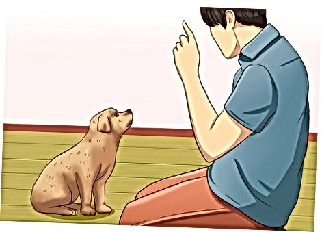 Înțelegeți comportamentul mușcării cățelușului