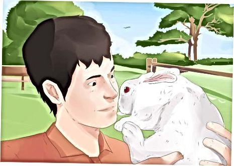 Interpretando el lenguaje corporal de tu conejo